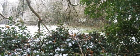 Dorset, November 2011